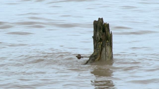 Rotten wooden post in tidal water