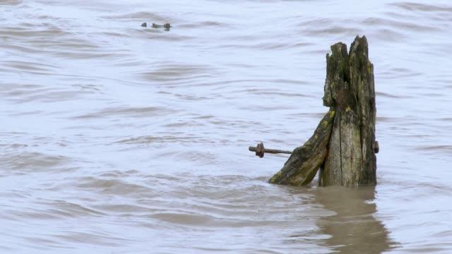 Verrotteten Holzpfosten im Gezeitenwasser