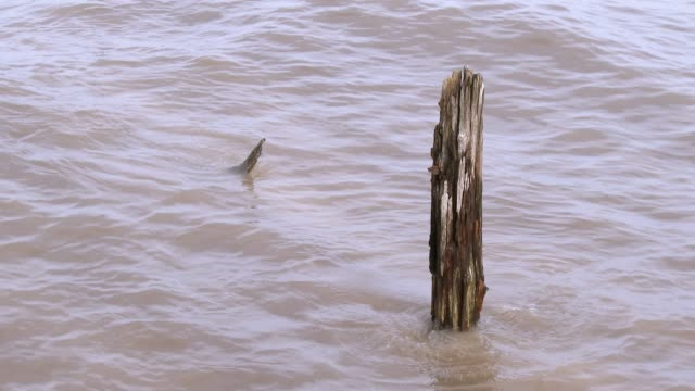 rotten wooden post in tidal water - johnfscott stock videos & royalty-free footage