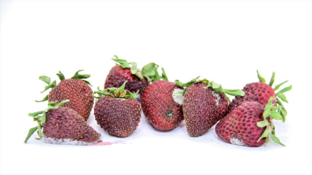 rotting strawberries - fungal mold stock videos & royalty-free footage