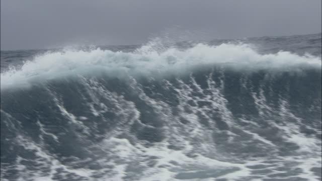 MS, Rough ocean, South Georgia Island