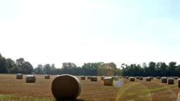 Round straw bales in a field