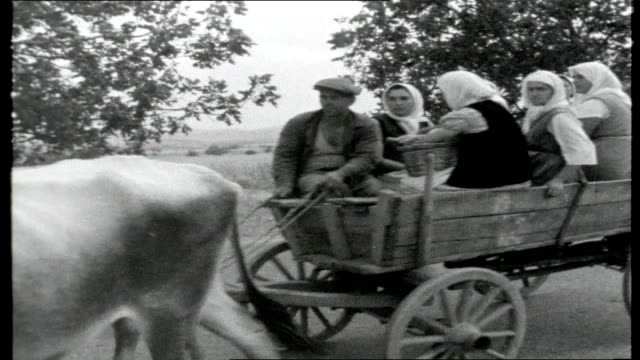 bulgaria the last satellite two oxen pulling full cart through field of crops and straining to pull load up verge onto road field workers mostly... - 牛車点の映像素材/bロール