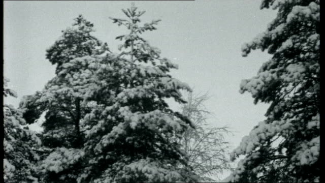 land of two christmases **music snow covered rocks snow covered forest with tall conifers snow covered landscape with trees snowy landscape and trees... - frozen water stock videos & royalty-free footage