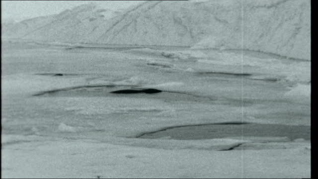 Operation Deep Freeze Weddell seal in water Scientist lying on ice looking down into water hole Weddell seals in waterholes in ice with another lying...