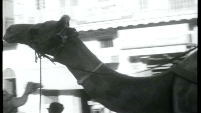 pakistan president and purdah pakistan karachi ext general street scenes people traffic along camels pulling carts / reporter with monkey / traffic... - punjab pakistan stock videos & royalty-free footage