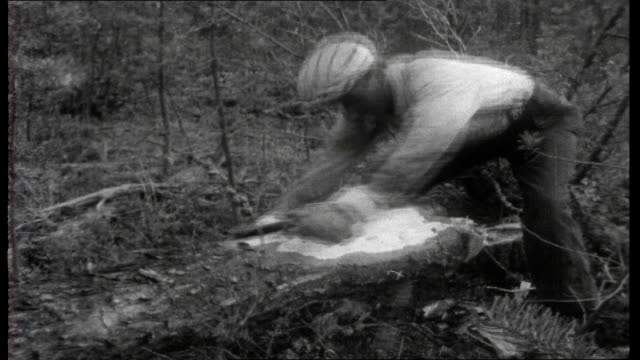 the road to uranium; forestry road through trees close shot of lumberjack using chainsaw to fell tree for telegraph pole forestry workers sawing up... - uranium stock videos & royalty-free footage