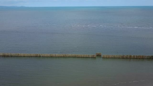 row of bamboo breakwater on the sea coast and mangrove forest in Rayong, Thailand