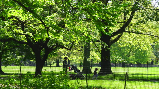 stockvideo's en b-roll-footage met row of big growing fresh green leaves trees stand along the footpath beside the great lawn in central park at new york city ny usa on may 06 2019. - jogster