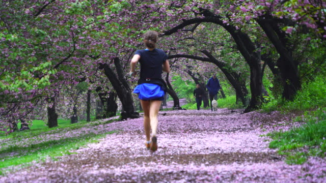 row of cherry blossoms arches surrounds the footpath, and myriad of fallen cherry petals cover the footpath in central park new york city ny usa on may 06 2019. - pista di atletica leggera video stock e b–roll