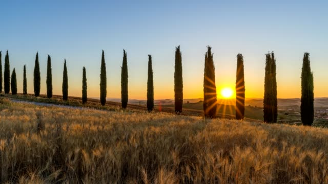 row of cypress trees in the summer at sunrise, monteroni d'arbia, provinz siena, tuscany, italy - toskana stock-videos und b-roll-filmmaterial
