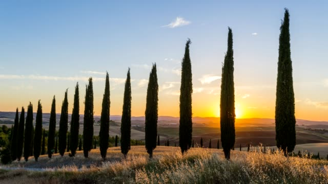 row of cypress trees in the summer at sunset, monteroni d'arbia, provinz siena, tuscany, italy - toskana stock-videos und b-roll-filmmaterial