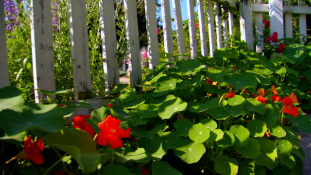 stockvideo's en b-roll-footage met row of flowers along the base of a picket fence, handheld shot - tuinhek