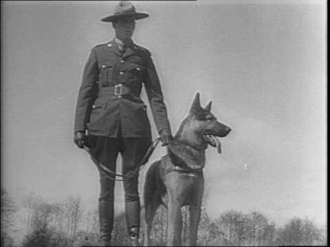 row of royal canadian mounted policemen with german shepherds sitting and barking / german sheppards jumping through a tire on wood supports / german... - smelling stock videos & royalty-free footage