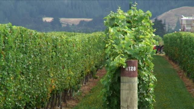 ms row of vines / renwick, new zealand - new zealand stock-videos und b-roll-filmmaterial