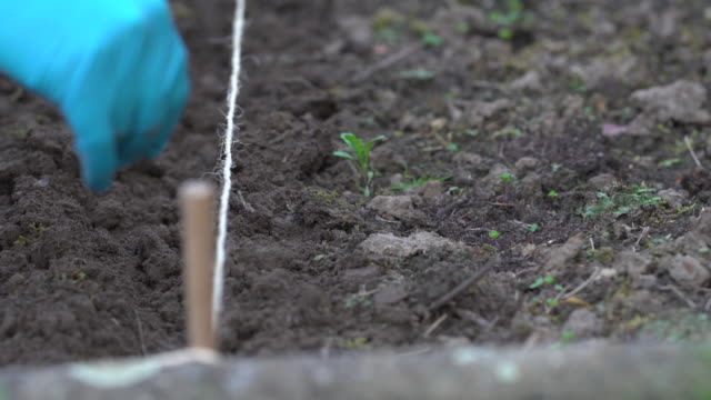 row seeding - gardening glove stock videos & royalty-free footage