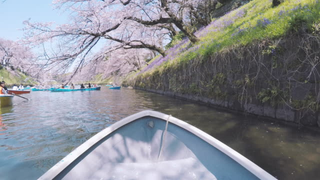 Ruderboot am See mit Cherry Blossom