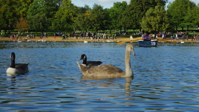 rowboat rider on the serpentine in london hyde park (uhd) - the serpentine london stock videos & royalty-free footage