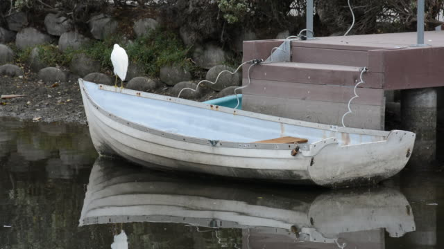 rowboat tied to a dock with a white egret standing on the bow - tied bow stock videos & royalty-free footage