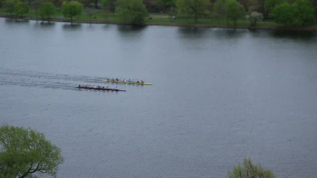 stockvideo's en b-roll-footage met rowing team - harvard university