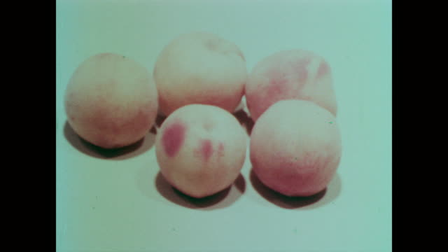 1967 rows and clusters of colorful peaches against a white background - peach stock videos & royalty-free footage