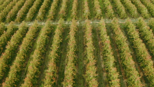 rows and rows of earthly goodness - western cape province stock videos & royalty-free footage
