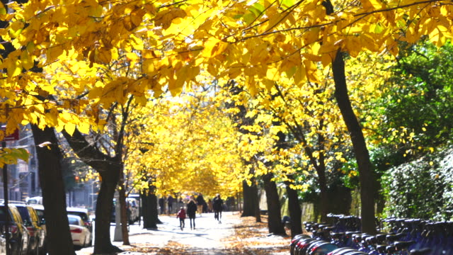 rows of autumn color trees surround the fifth avenue sidewalk, which are illuminated by autumn sunlight at central park new york ny usa on nov. 11 2018. - avenue stock videos & royalty-free footage
