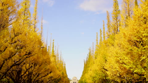 stockvideo's en b-roll-footage met rows of autumn leaves ginkgo tree stand along the both side of the ginkgo tree avenue and clouds move in the blue sky at jingu gaien, chhiyoda ward, tokyo japan on november 19 2019. - brede straat