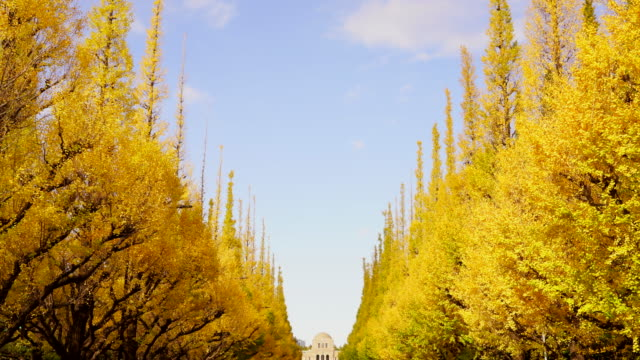 rows of autumn leaves ginkgo tree stand along the both side of the ginkgo tree avenue and clouds move in the blue sky at jingu gaien, chhiyoda ward, tokyo japan on november 19 2019. - avenue stock videos & royalty-free footage