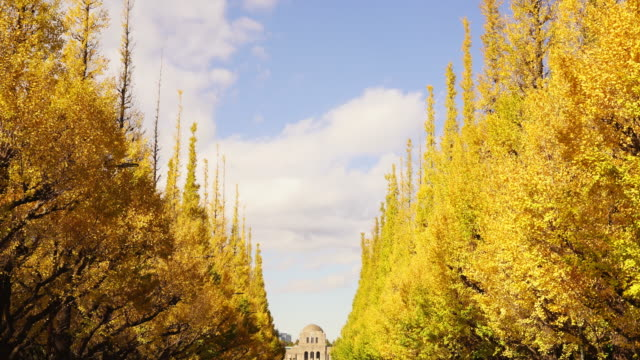 rows of autumn leaves ginkgo tree stand along the both side of the ginkgo tree avenue and clouds move in the blue sky at jingu gaien, chhiyoda ward, tokyo japan on november 19 2017. - ginkgobaum stock-videos und b-roll-filmmaterial
