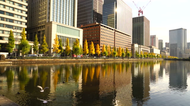 Rows of autumn leaves Ginkgo trees and rows of Marunouchi financial district high-rise buildings reflect to the Imperial Moat, which stand along the Imperial Moat at Marunouchi Tokyo Japan on November 25 2017.Gulls fly over and water birds swim and make r