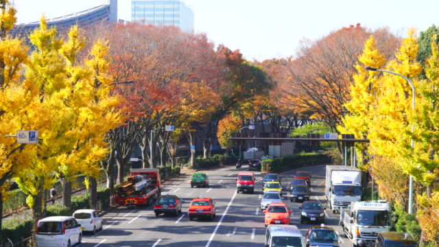 rows of autumn leaves ginkgo trees stand along both side of the street, and surround the traffic at harajuku district  shibuya tokyo japan on november 29 2017. yoyogi national gymnasium can be seen in the left. - treelined stock videos & royalty-free footage