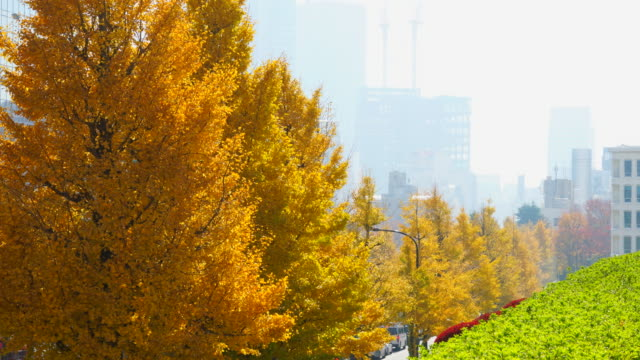 rows of autumn leaves ginkgo trees stand along the street toward foggy shibuya town at harajuku district shibuya tokyo japan on november 29 2017. cars go through behind the tree-lined street. cityscape of foggy shibuya town can be seen behind. - treelined stock videos & royalty-free footage