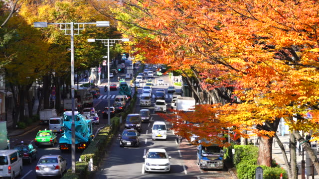 rows of autumn leaves zelkova trees stand along omotesando (frontal approach to meiji jingu shrine) between harajuku and aoyama district shibuya tokyo japan on november 26 2017. people walk on the sidewalk and cars go through the avenue. - shrine stock videos and b-roll footage