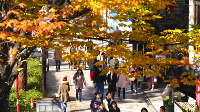 rows of autumn leaves zelkova trees stand along omotesando (frontal approach to meiji jingu shrine) between harajuku and aoyama district shibuya tokyo japan on november 26 2017. people walk on the sidewalk under the autumn color leaves. - shrine stock videos and b-roll footage