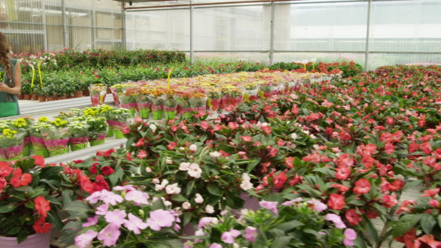 ds rows of floering plants on display tables in greenhouse, female gardner explainig plants to businessman holding a potted plant - pot plant stock videos and b-roll footage