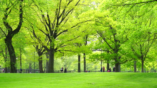 Rows of fresh green trees grow and surround the park pathway at The Mall Central Park New York in spring. People walk on the pathway at The Mall.