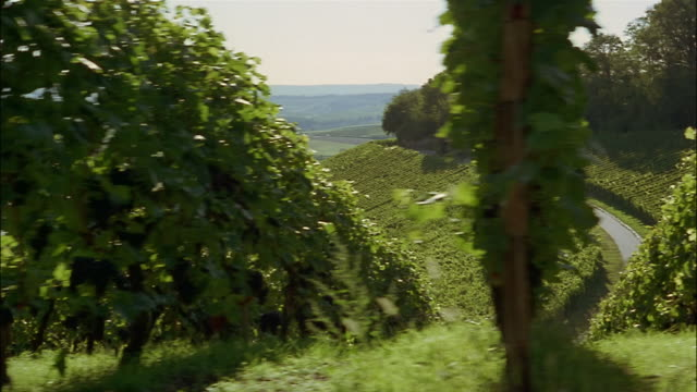 rows of grapevines grow on a steep hill over a green valley. - steep hill stock videos & royalty-free footage