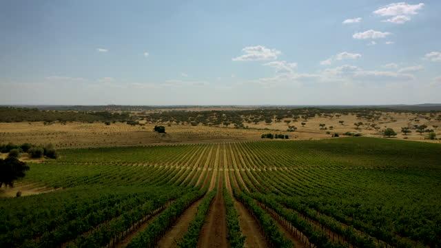 vídeos de stock e filmes b-roll de rows of grapevines in a vineyard, aerial footage from portugal, alentejo - vinha