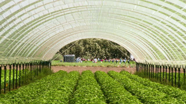 zo ws rows of organically grown herbs in greenhouse, farmers working in background, thermal, california, usa - diminishing perspective stock videos & royalty-free footage