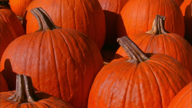 cu pan rows of pumpkins, waterford, connecticut - halloween stock videos & royalty-free footage