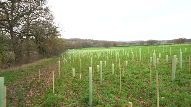 rows of trees newly planted ahead of national tree week community volunteers and thames 21 employees plant a range of oak, holly, birch, ferns,... - footpath stock videos & royalty-free footage