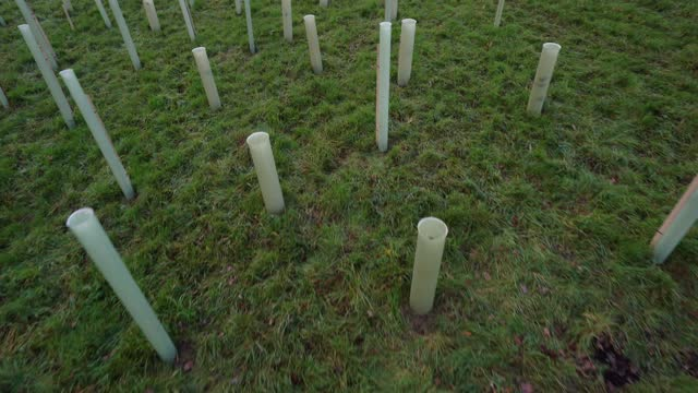 rows of trees newly planted ahead of national tree week community volunteers and thames 21 employees plant a range of oak, holly, birch, ferns,... - pedestrian walkway stock videos & royalty-free footage