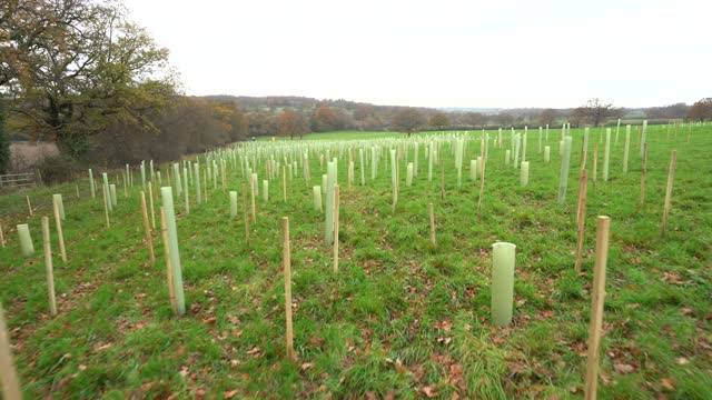 rows of trees newly planted ahead of national tree week community volunteers and thames 21 employees plant a range of oak, holly, birch, ferns,... - planting stock videos & royalty-free footage