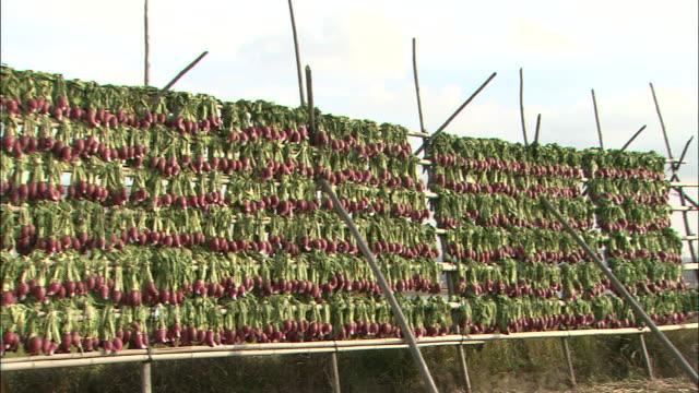 rows of tsuda-kabu red turnips hang on racks outside to dry. - shimane prefecture stock videos & royalty-free footage