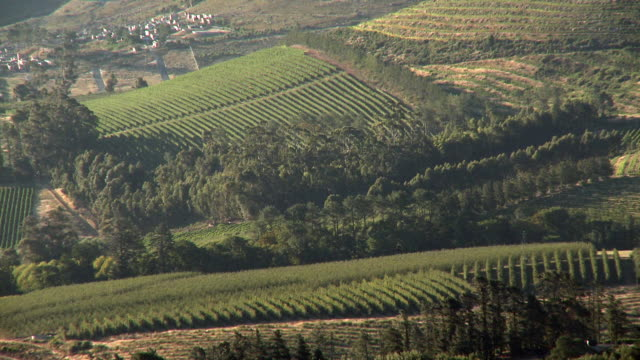 ws ha rows of vineyards on mountain slope, franschhoek, western cape, south africa - franschhoek stock videos and b-roll footage