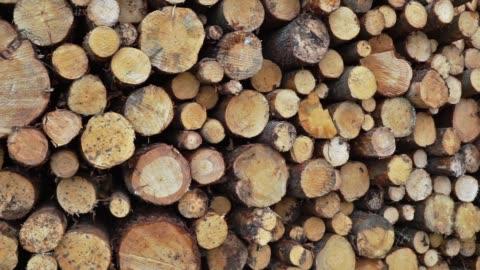 vídeos y material grabado en eventos de stock de hileras de troncos de madera y árboles la industria de la madera panorámica de derecha a izquierda - madera material