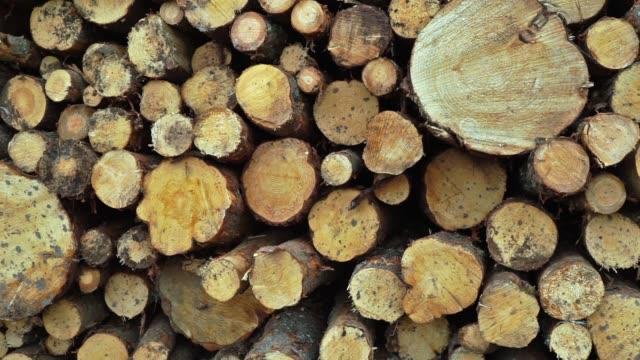 vídeos de stock, filmes e b-roll de fileiras de troncos e de árvores de madeira serrada indústria de rastreamento tiro - ramo parte de uma planta