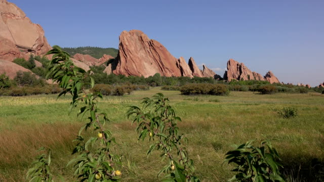 roxborough state park red rocks wild plum tree fountain trail colorado rocky mountains - state park stock videos & royalty-free footage