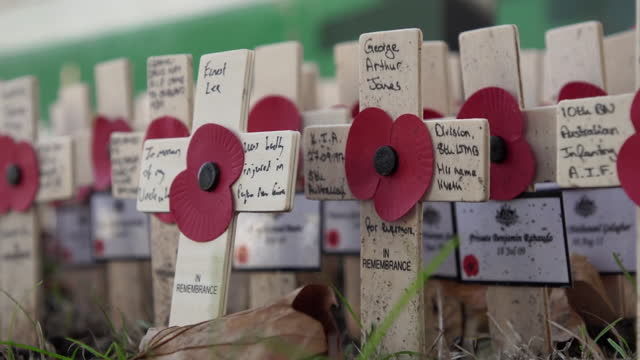 royal british legion poppies and small wooden crosses for remembrance sunday - allied forces stock videos & royalty-free footage